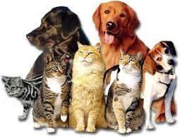 animals-4